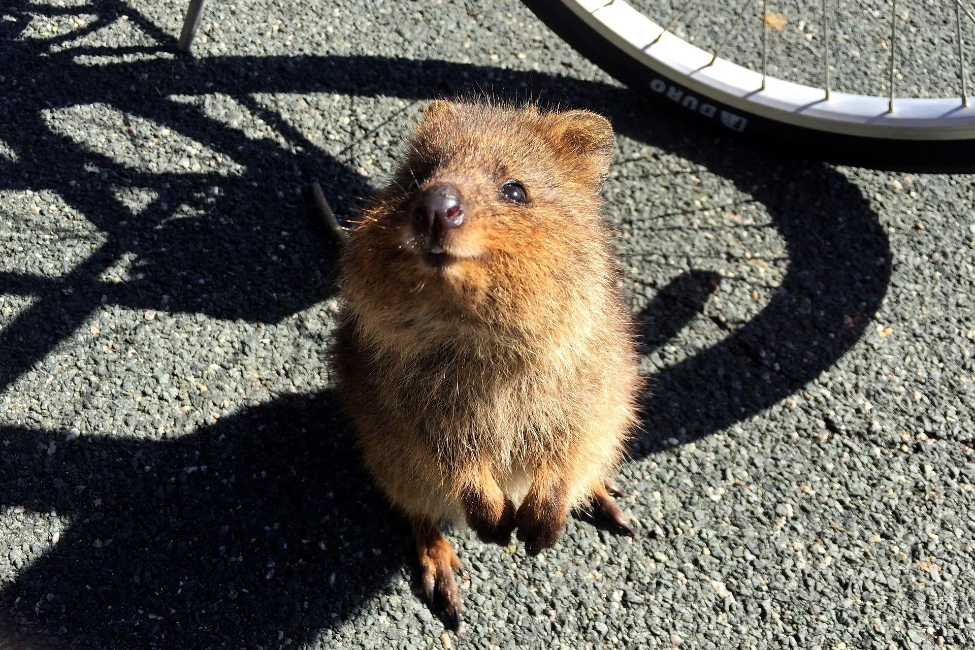 kuoki-australia